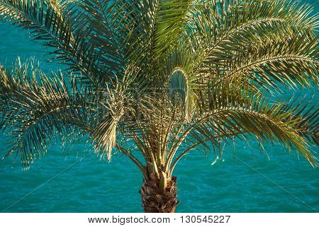 beautiful clear blue  turquoise sea ocean water surface with ripples and big palm on foreground.
