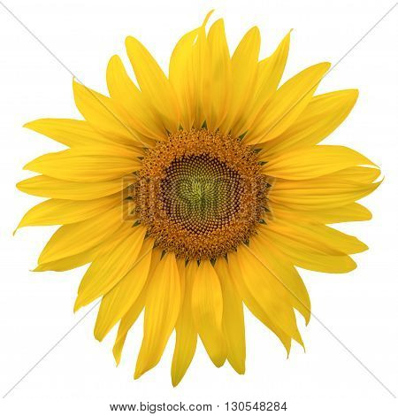 close up beautyful yellow sunflower isolated on white background