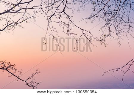 Silhouette of tree branches with nice sky in twilight time.