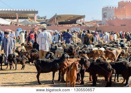 GUELMIM MOROCCO - OCTOBER 31 2015: Goats for sale at the weekly market in the south Moroccan town of Guelmim.