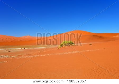 Beautiful landscape with big red dunes at sunrise Sossusvlei Namib Naukluft National Park Namibia