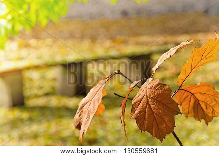 detail of twig of oak tree in the autumn