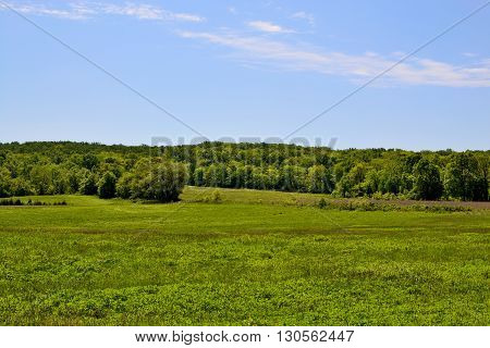 A landscape of a beautiful meadow going into a heavily wooded area.