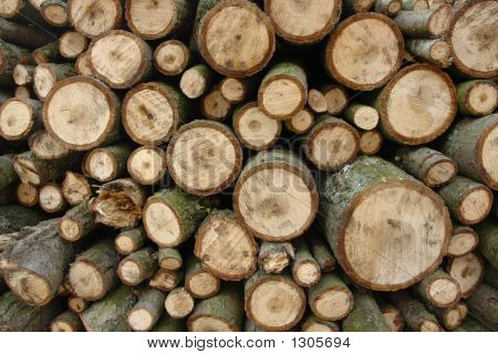 Stacked Firewood Logs