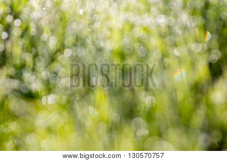 Sunrise and fresh dewy grass. Sunny day concept.