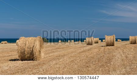Agriculture field of Round bales of hay after harvesting near the sea. Image taken at Larnaca Cyprus