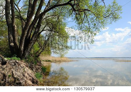 tree on the coast of the lake. Branches over water