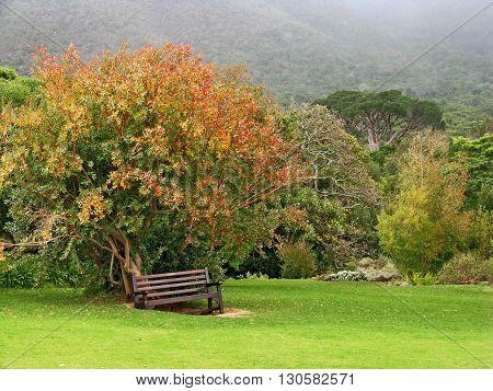 Autumn Mist, Kirstenbosch Botanical Gardens cape Town South Africa 08