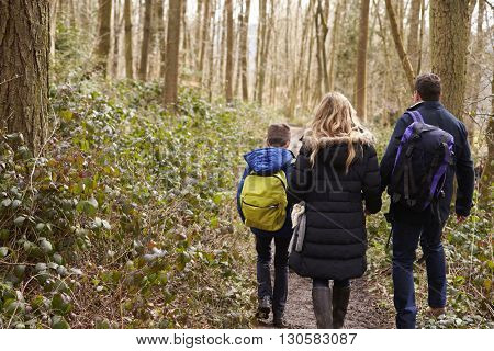 Family walking together through a wood, back view close up