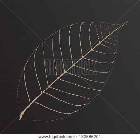 skeletonized leaf for your design, isolated leaf