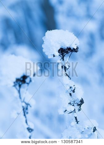 Beautiful fluffy white snow lies on the dried grass field in the wild cold frosty winter Russia