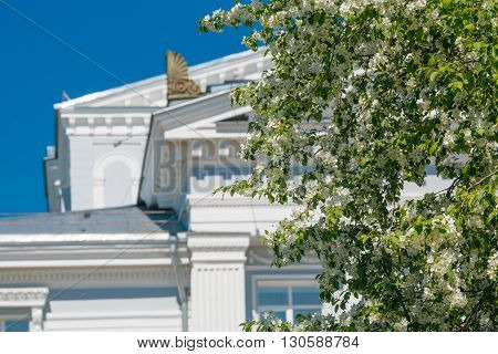 Branch Of Apple Blossoms On A Background Of Urban Buildings