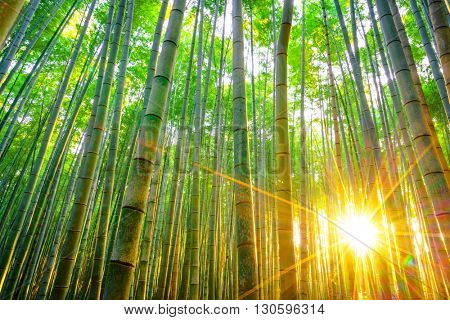 Bamboo forest with sunny in morning