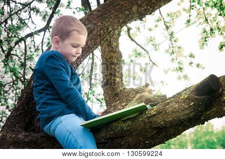 boy sitting on a flowering apple tree in the orchard at sunset and reading a book