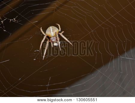Large spider with prey caught in web