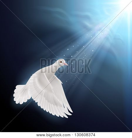 White dove flying in sunlight against dark blue sky. Symbol of peace and hope