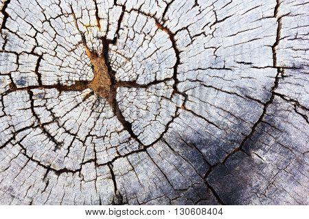 Wood texture background. Old tree stump texture.