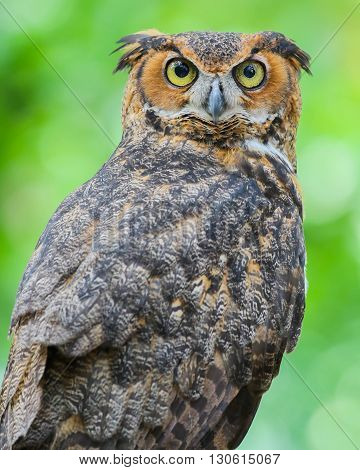 An owl with big bright round eyes