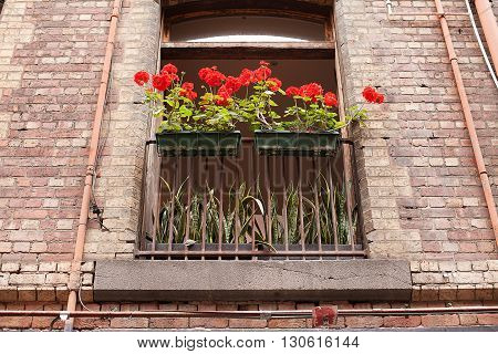 View from below of flower box in window with Red Geranium flowers