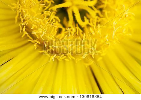 Yellow Flower Close Up