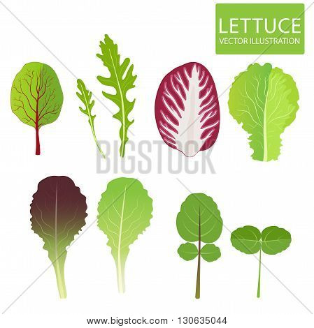 Lettuce Types Vector. Set Of Salad Bowl Illustration. Vector Set Isolated On White Background. Cress, Red Lettuce, Rucola, Iceberg, Arugula, Radicchio.