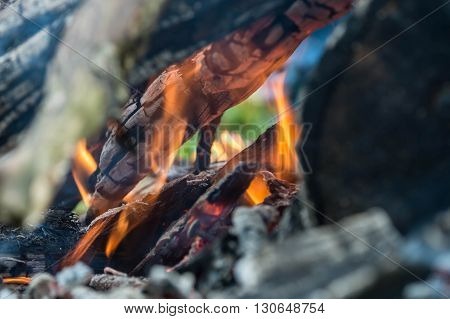 Branches And Wood In The Fire Close Up
