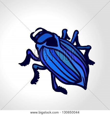 Ground beetle. Colorful vector drawing of big blue beetle. Insect isolated on the white background.