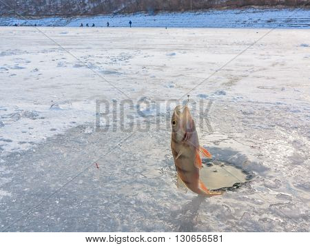 Beautiful winter landscape on the river. River in ice. Winter fishing