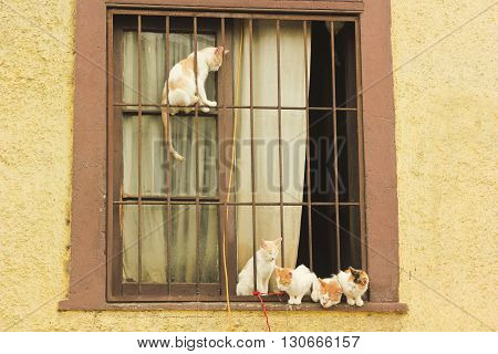 five sitting and relaxing red and white cats in window with bars and yellow walls