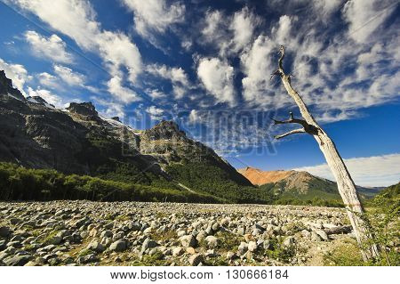 old dead tree on river bank in forest-covered mountains with blue sky and clouds