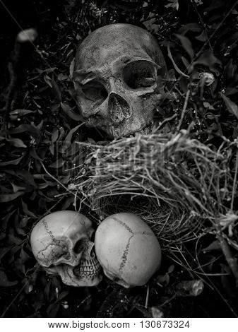 Still life with skull in abandoned bird nest Concept save world