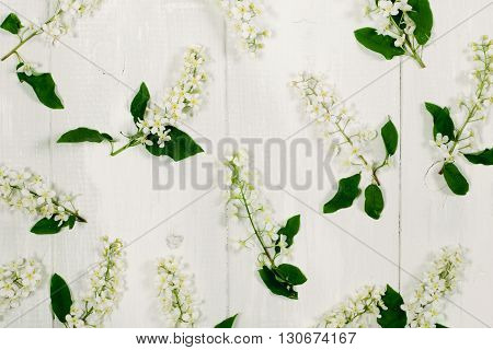 Bird-tree flowers on the white wooden background. Top view, flat lay.