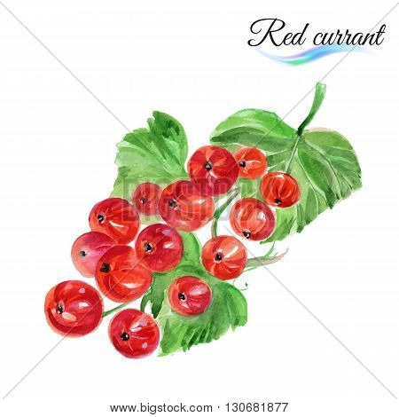 Watercolor fruit red currant isolated on white background
