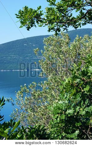 View Adriatic sea through the branches of deciduous trees