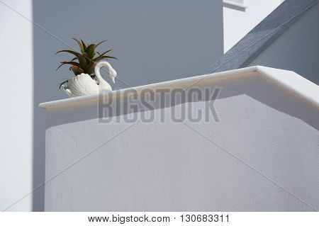 Plant At A Staircase
