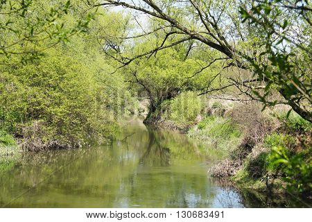 Odra river with nice green vegetation on the banks in spring