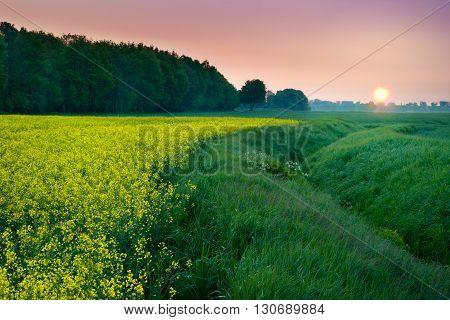 Sun rises over rape field. May landscape. Masuria Poland.