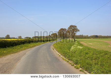Small Country Road With Oak Trees