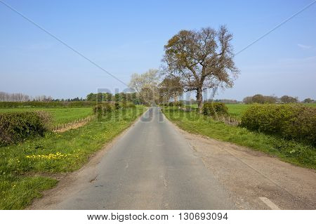 Country Lane In Springtime