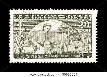 ROMANIA - CIRCA 1954 : Cancelled postage stamp printed by Romania, that shows Girl feeding calf.