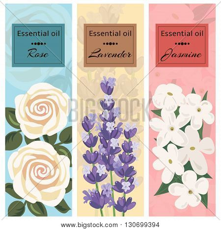Essential oil set collection. Rose lavender jasmine banner set. Vector illustration EPS 10.
