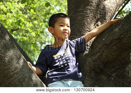 Japanese boy climbing the tree (first grade at elementary school)