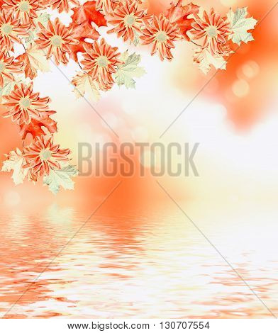 Autumn foliage. Golden Autumn. Autumn landscape with yellow and red leaves. flowers chrysanthemum
