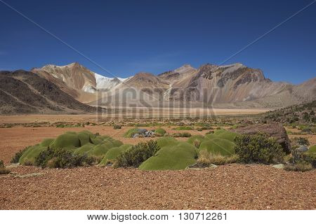 Colourful mountains at Suriplaza in the Atacama Desert of north east Chile. The green plants in the foreground are rare native cushion plants, Azorella compacta.