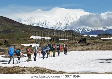 Hiking on Kamchatka: group of hiker with backpack goes in mountain on background of beautiful Klyuchevskaya Group of Volcanoes on sunny day. Kamchatka Peninsula Russian Far East Eurasia.