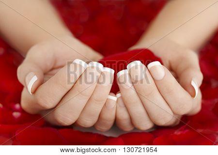 Elegant French Natural Manicure Hands Holding Red Rose Petals