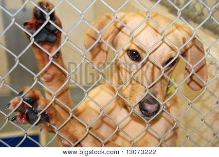 Cães esperando adoção