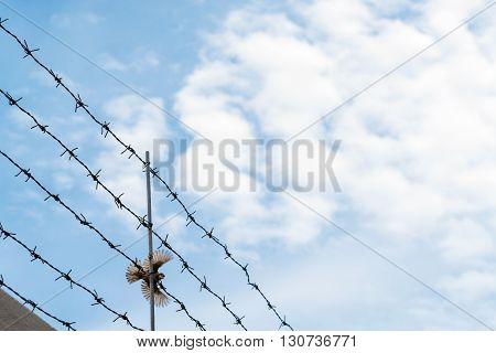 Barbed wire on blue sky with bird flying across wire, concept of escape to freedom