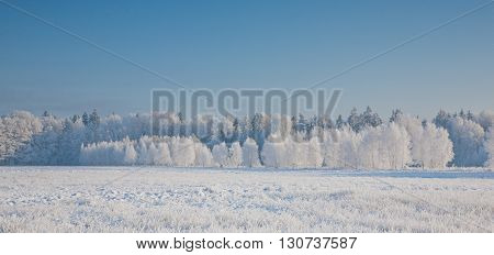 Winter landscape with trees snow wrapped against blue sky,Podlasie Region, Poland, Europe