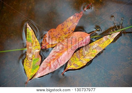Colourful eucalyptus leaves floating on top of the water